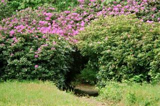 Tonnelle botanic